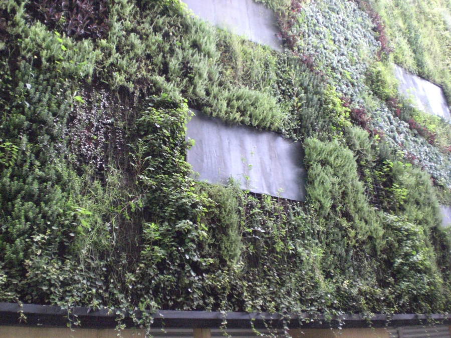 A vertical garden in Mexico City.